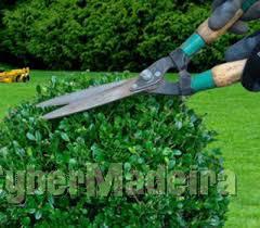 Jardins manutenção E limpeza
