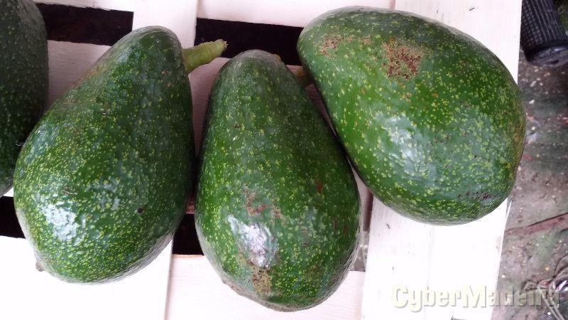 Pêras abacates