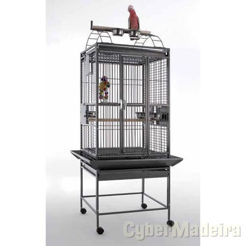 Papagaio africano de cauda vermelha