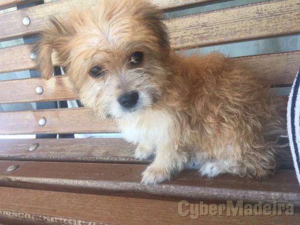 Dou cão bebe  3MESES Rafeiro