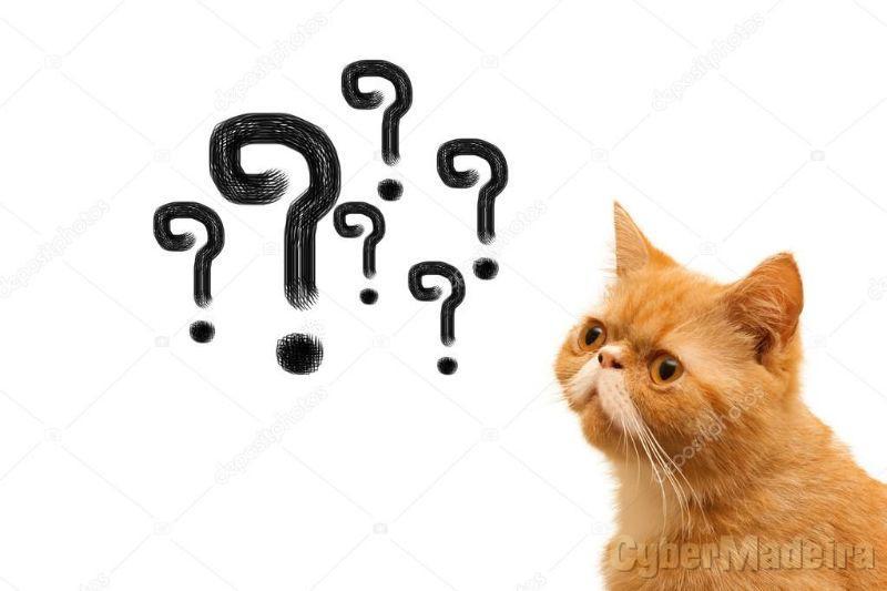 Procuro Gato Siamês, Gato Persa, Ragdoll entre outrosPersa