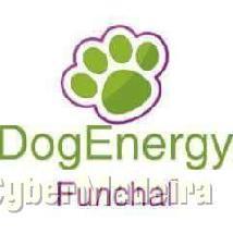 Dogenergy funchal