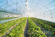 Procura-se terreno agricola para arrendamento
