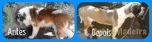 Tosquia E banho para cães ao domicilio