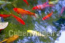 Peixes de água doçe