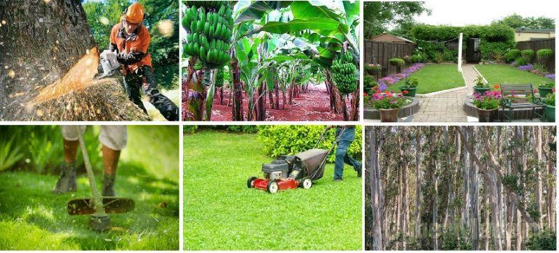 Faço limpeza de terrenos e jardinagem - mato , arbustos, ramos, árvores , silvado etc etc..