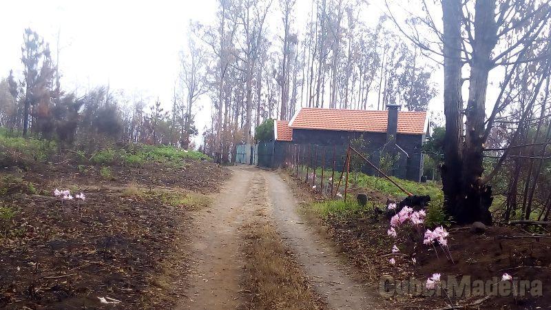 Terreno Outros para Venda Canhas, Centro